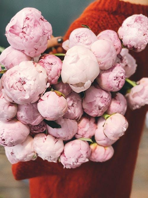 Δωρεάν στοκ φωτογραφιών με ανθισμένο τριαντάφυλλο, γλύκισμα, δημιουργώ ομάδα, ζάχαρη