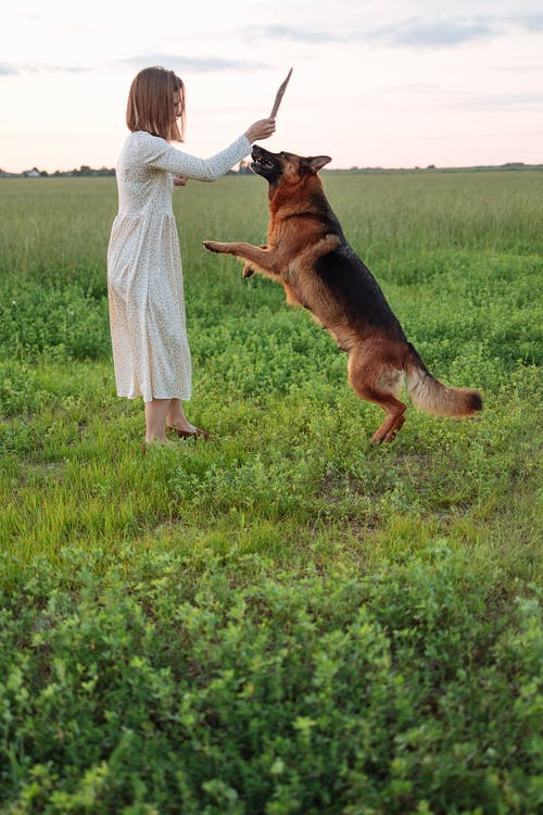 A Girl Playing Fetch with a German Shepherd