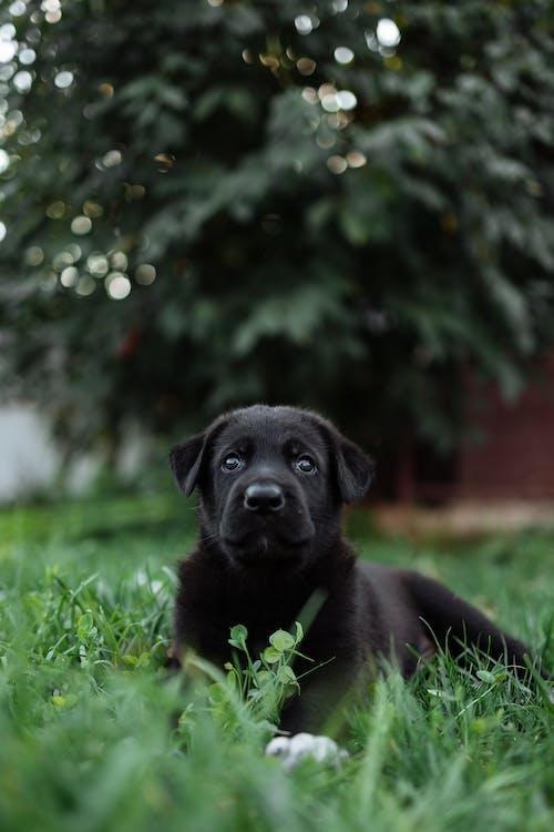Black Short Coated Medium Sized Dog on Green Grass