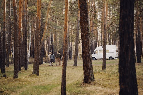 Free stock photo of autumn, beauty in nature, camping