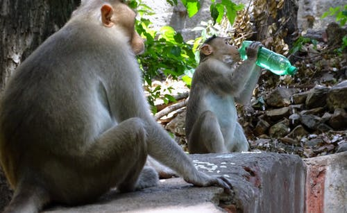 全球暖化, 印度, 口渴, 夏天 的 免费素材照片