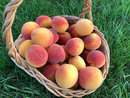 Free stock photo of peach, peaches, peaches basket