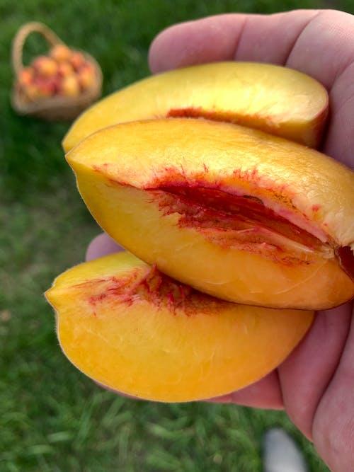 Free stock photo of fruit, peaches