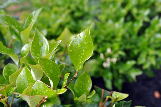 Green Leaves With Water Droplets