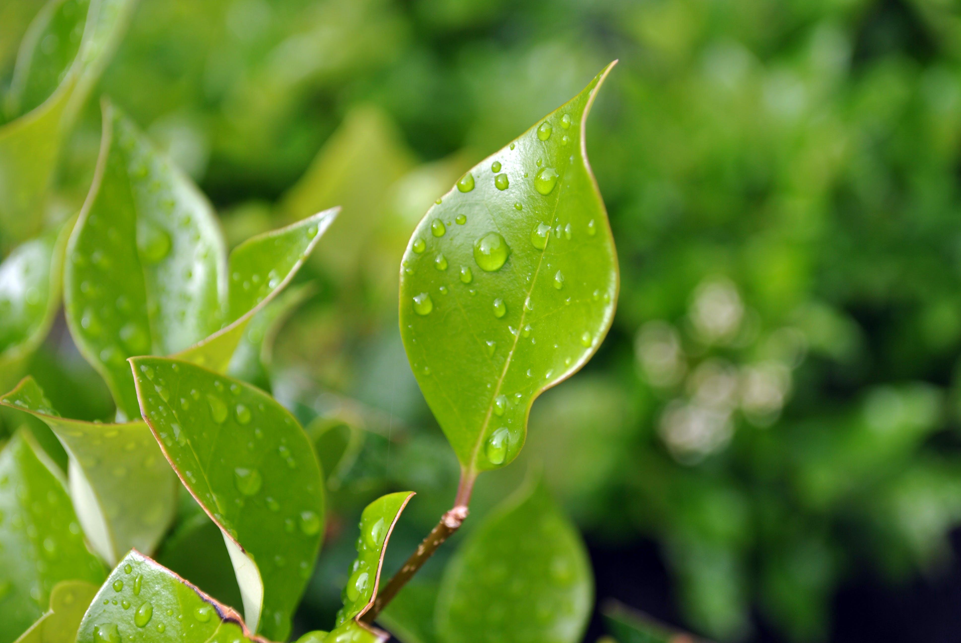 Free stock photo of water, bush, garden, rainy