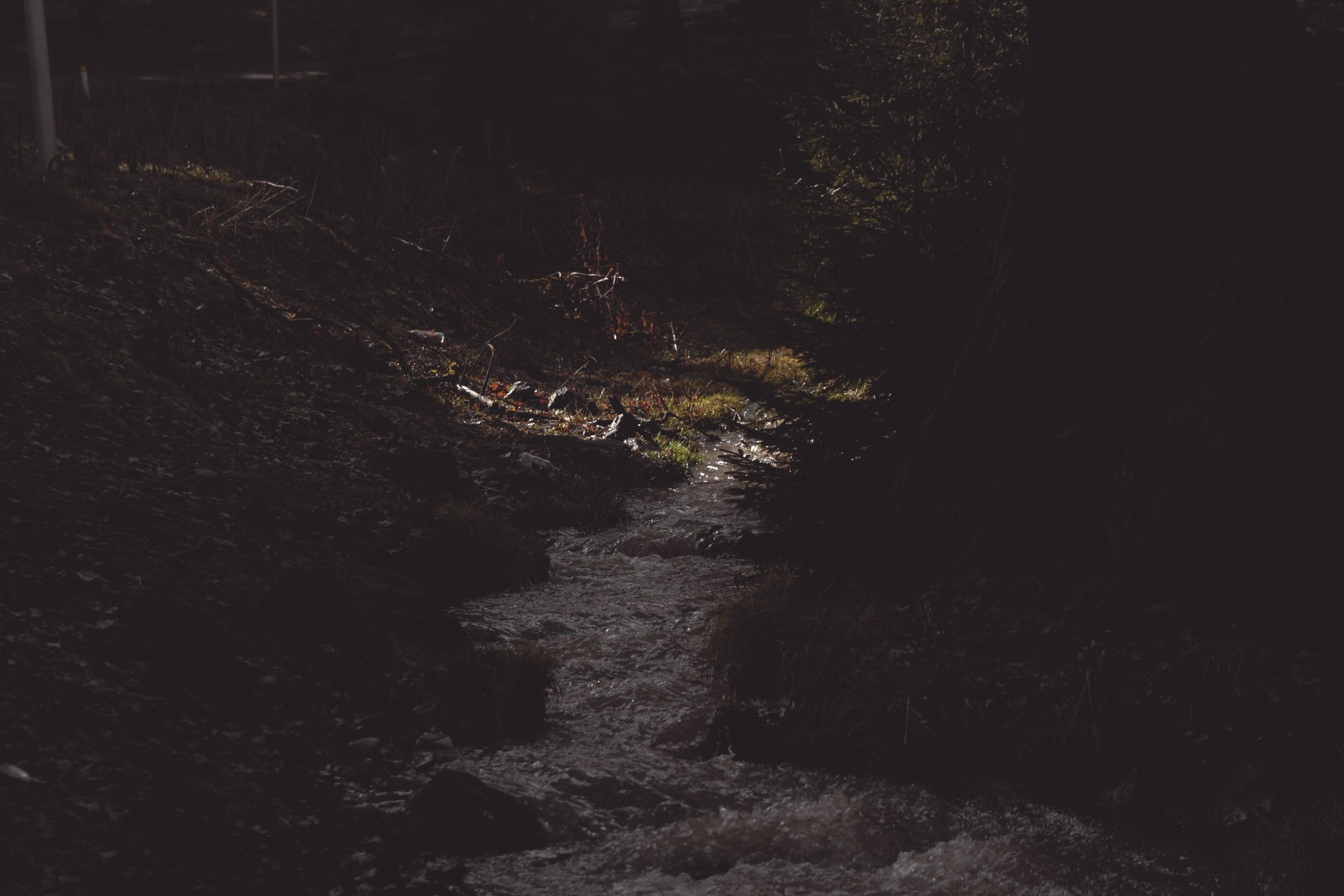 Photo of Footpath Between Trees