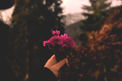 bitki, borjomi, çiçek, Çiçek açmak içeren Ücretsiz stok fotoğraf