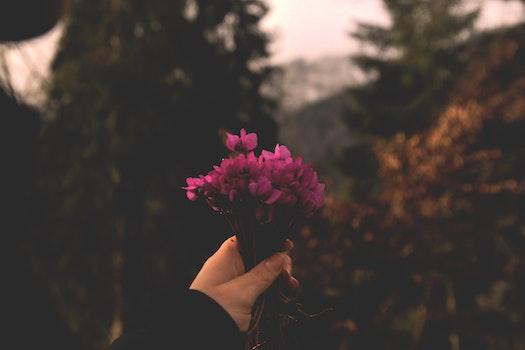 Kostenloses Stock Foto zu hand, blumen, pflanze, blume