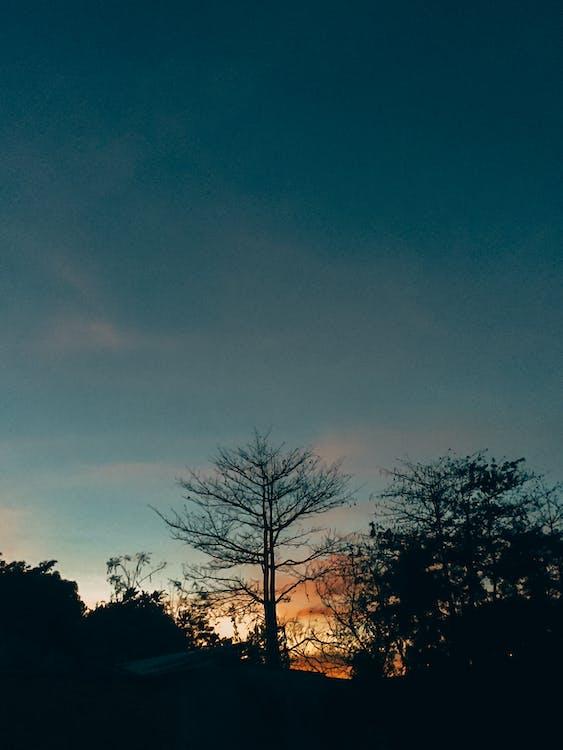 arbres, capvespre, cel