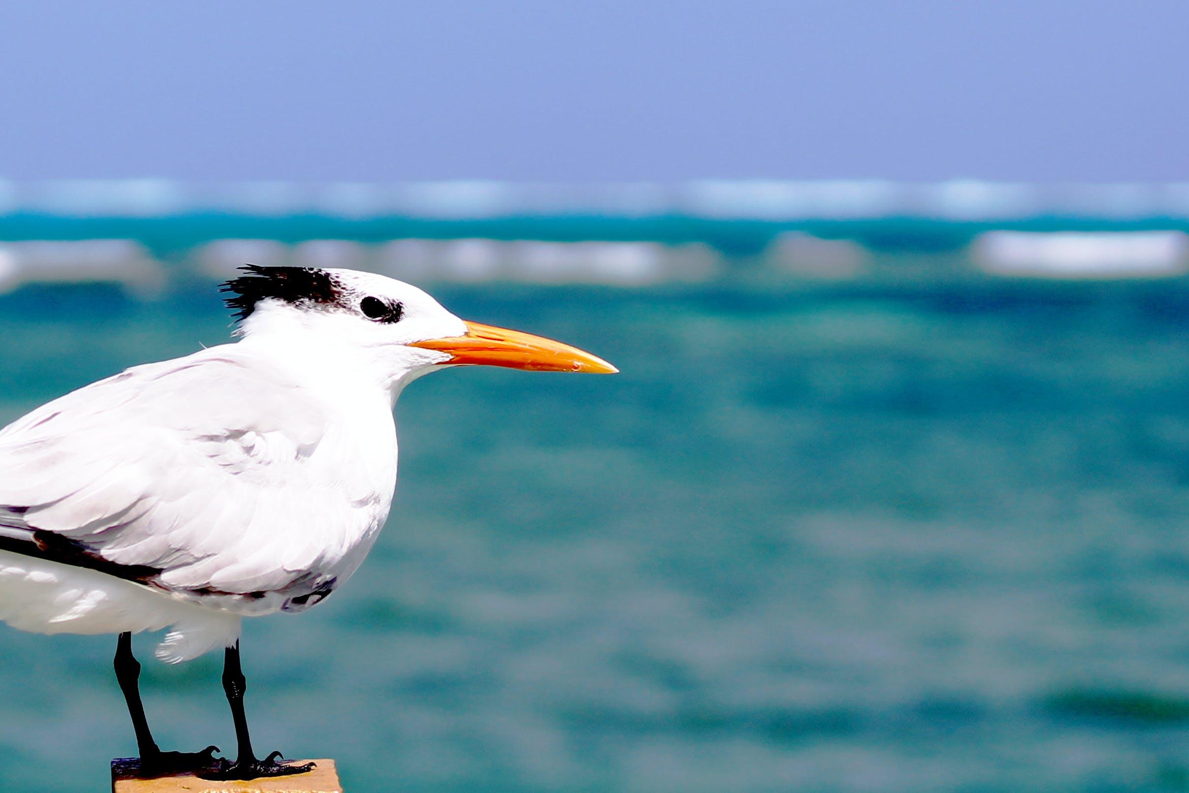 Ảnh lưu trữ miễn phí về biển, con vật, Nước, san andrã