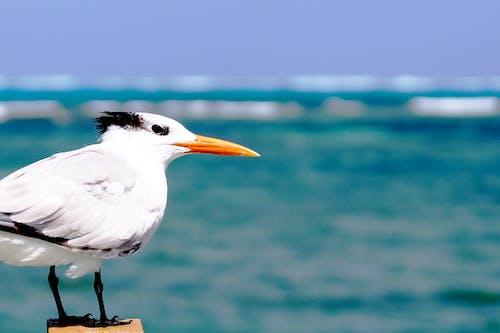 deniz, hayvan, kuş, martı içeren Ücretsiz stok fotoğraf