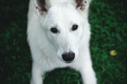 Photography of a White Dog