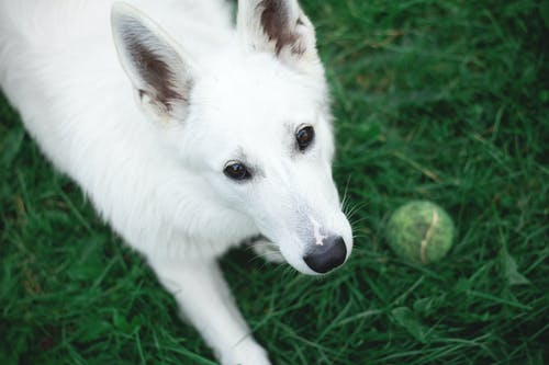 Free stock photo of baby, ball, dog