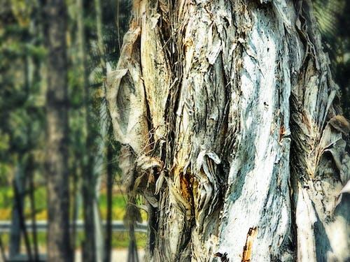 Základová fotografie zdarma na téma dokonalost přírody, jarní čas, kmeny, kůže stromů