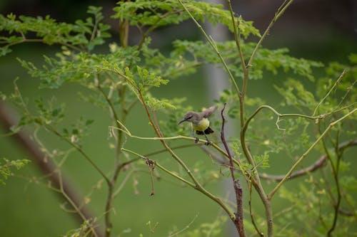 Free stock photo of bird, bird eye, bird flying