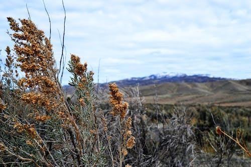 Brown Grass Field in Macro Shot