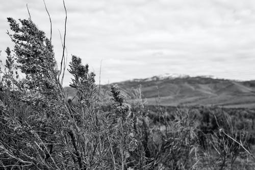 Imagine de stoc gratuită din arbuști, cer înnorat, flori, iarbă
