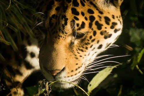 Kostnadsfri bild av afrika, däggdjur, djur, djurpark
