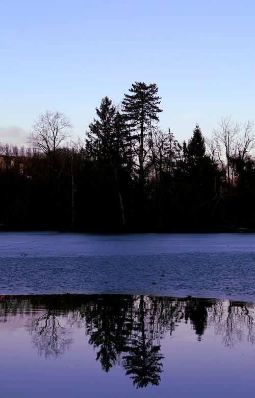 Imagine de stoc gratuită din arbori, cer albastru, cer senin, codru