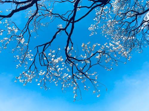 Kostenloses Stock Foto zu baum, blumen, blüte, farben