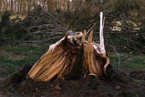 Darmowe zdjęcie z galerii z burza, drewno, drzewo, neerpelt
