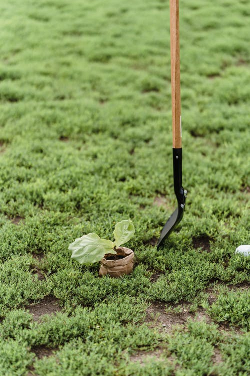 Brown and Black Shovel on Green Grass Field