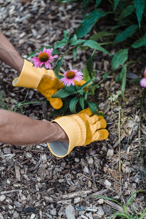 Person in Yellow Rain Boots Holding Yellow and Purple Flower