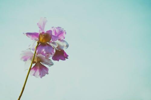 Kostenloses Stock Foto zu blühen, blume, blumengarten, blütenblatt