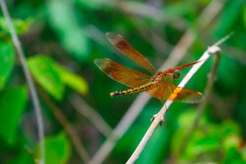 Kostenloses Stock Foto zu dunkelgrün, fliegen, fliegende libelle, grün