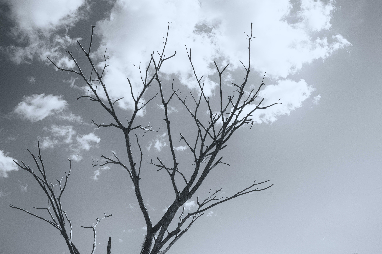 Free stock photo of dead tree, dead trees, tree