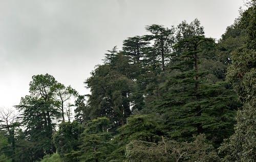 Foto d'estoc gratuïta de alpí, arbre, bosc