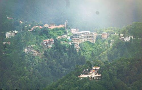 Foto d'estoc gratuïta de bosc, darjeeling, estació de muntanya