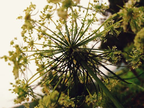 Immagine gratuita di ambiente, colori, crescita, fiori