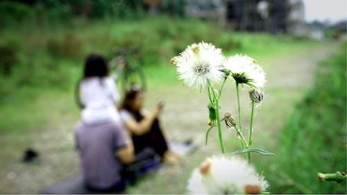 Základová fotografie zdarma na téma bílá květina, hloubka ostrosti, hřiště, krásný