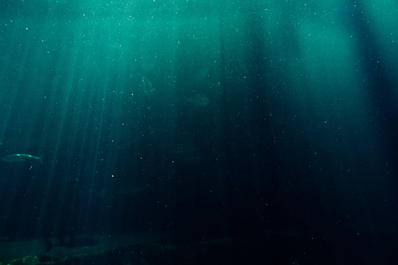 Ingyenes stockfotó felfedezés, hal, homály, kék témában