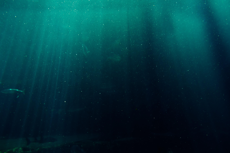 250 Interesting Underwater Photos 183 Pexels 183 Free Stock