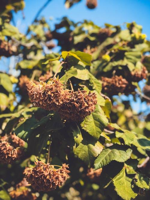 Ảnh lưu trữ miễn phí về chi nhánh, dây leo, hệ thực vật, hoa