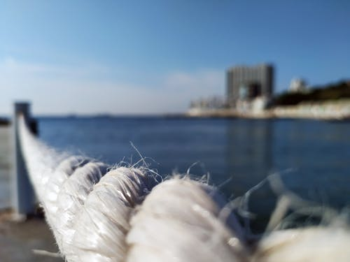 Free stock photo of rope, sea, water