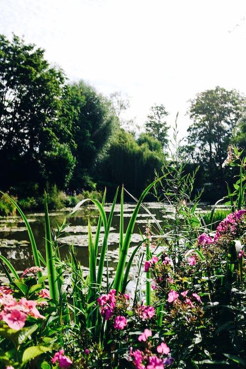 公園, 增長, 夏天 的 免費圖庫相片