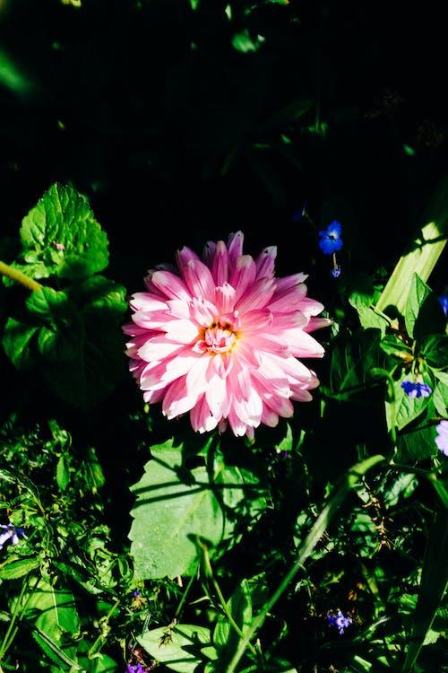 優雅, 增長, 夏天 的 免費圖庫相片