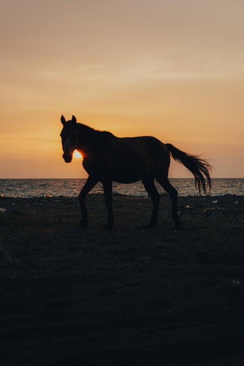 Brown Horse on Brown Sand during Sunset