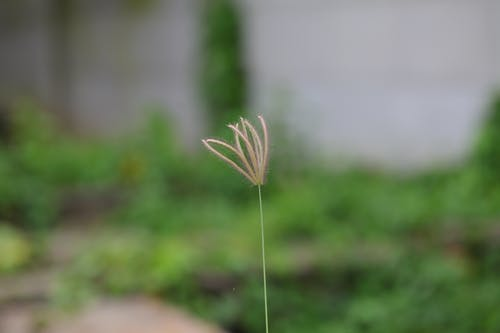 Foto d'estoc gratuïta de herba, natura