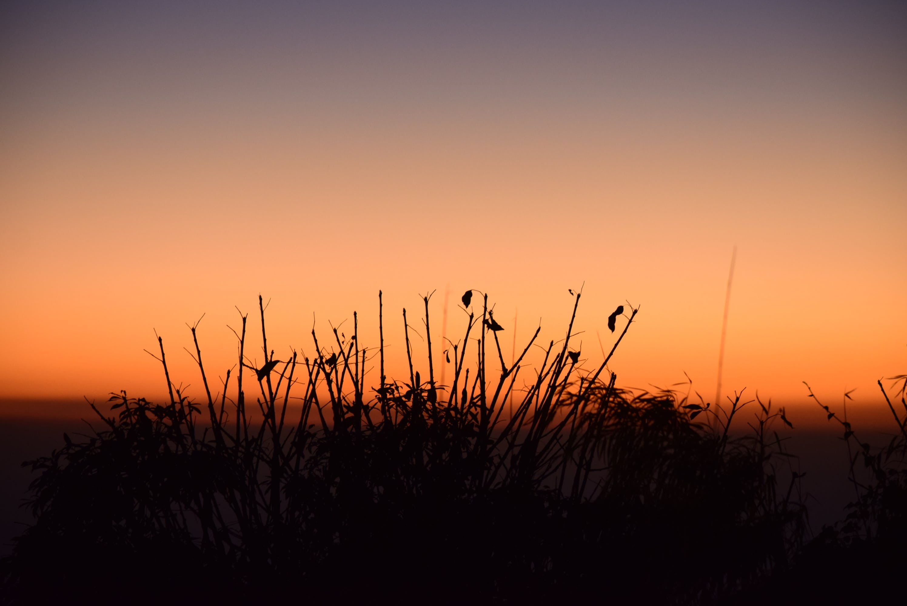 Silhouette Photo of Grass