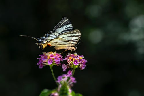 Close-Up Photo of a Scarce Swallowtail Perched on a Flower