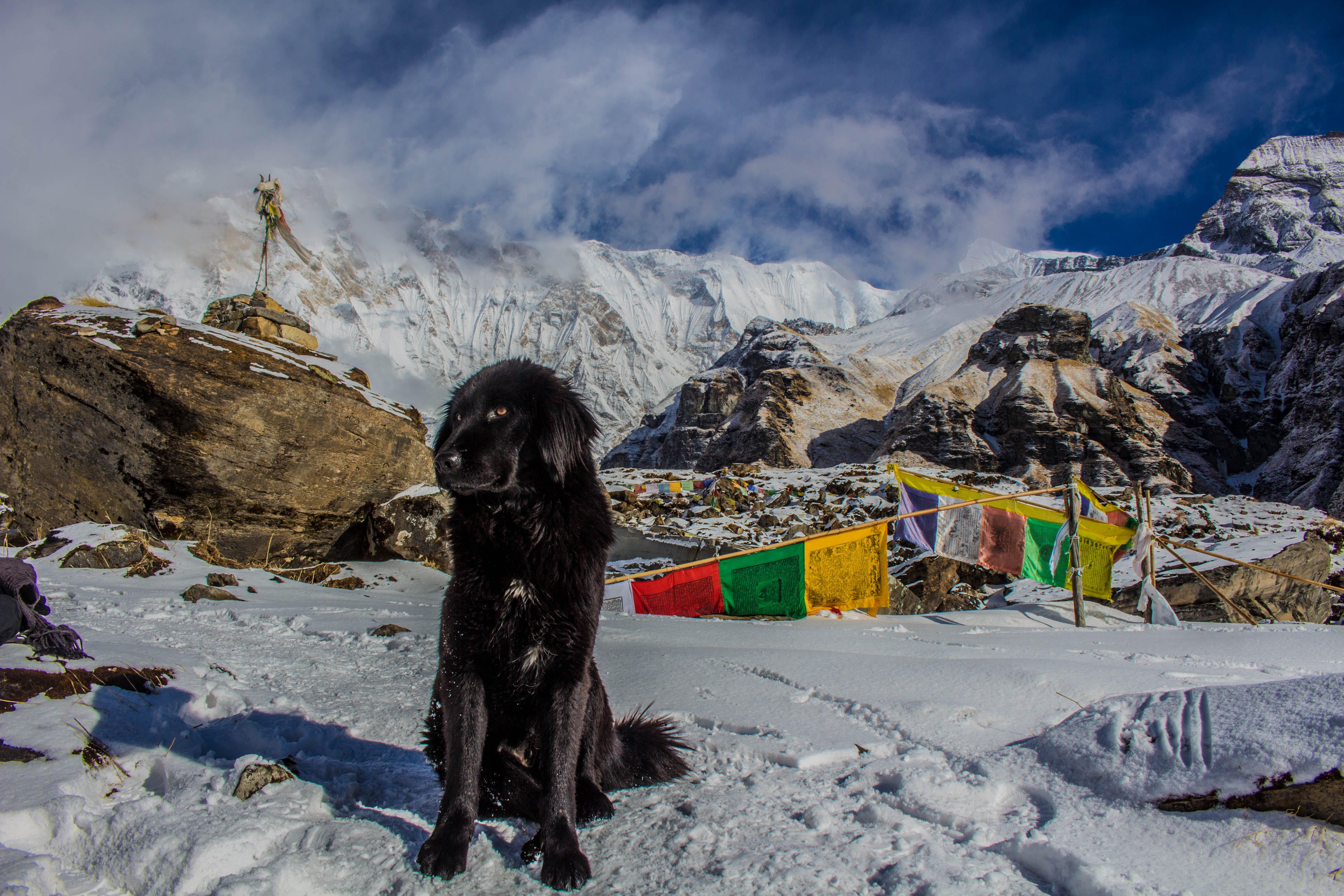Black Dog on Snowy Mountain