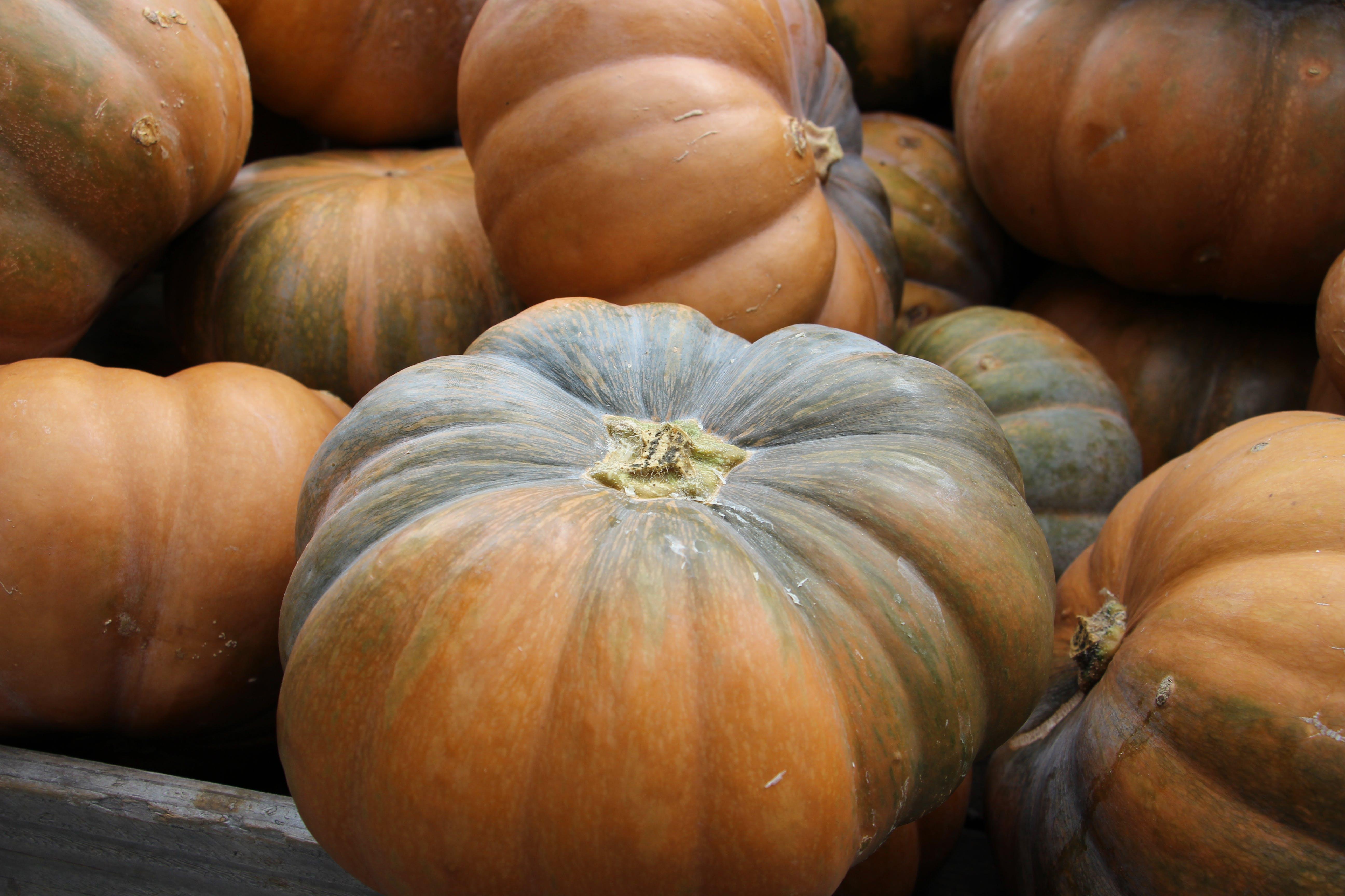of colors of autumn, germany, pumpkin, pumpkins
