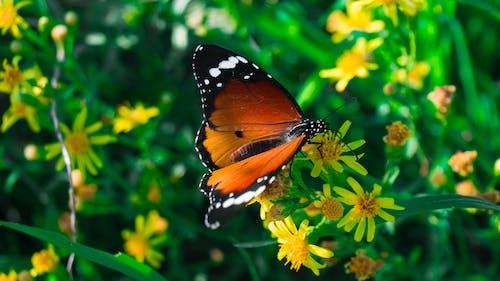 Foto d'estoc gratuïta de fauna, flora, flors, herba