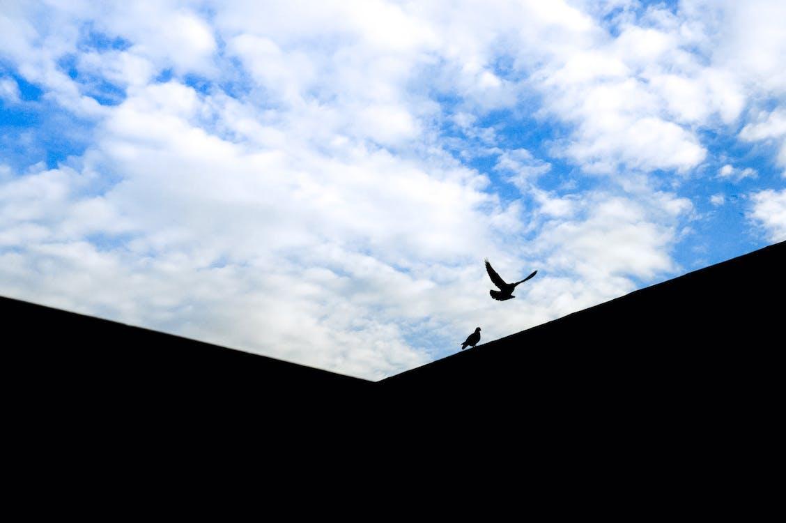 blau, fliegen, flügel