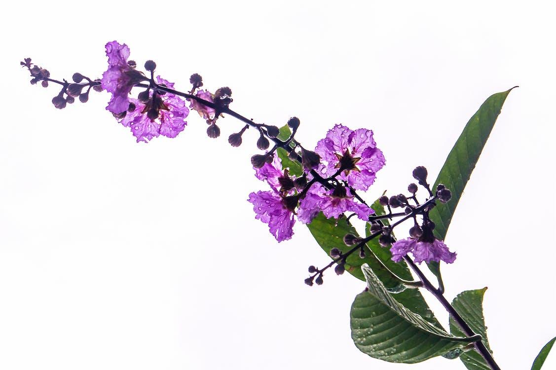 après la pluie, centrales, fleur