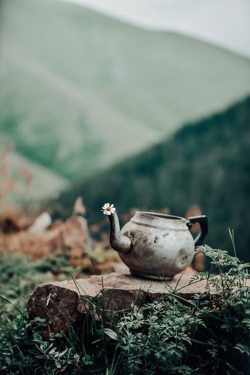 White and Brown Ceramic Teapot on Brown Soil